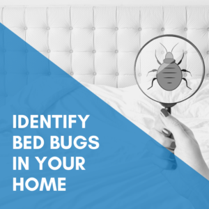 Identify Bed Bugs In Your Home