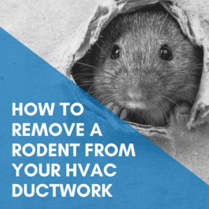 How to remove a rodent from your HVAC ductwork