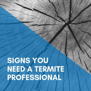 The Signs You Need A Termite Control Professional