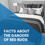 Facts About the Dangers of Bed Bugs