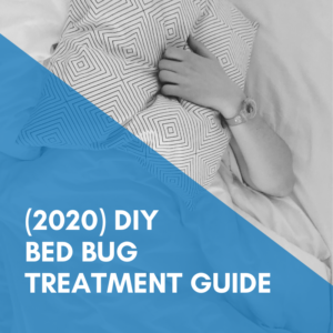 Comprehensive DIY Bed Bug Treatment Guide (2020 Edition)