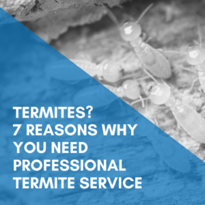 Termites? 7 Reasons Why You Need Professional Termite Service