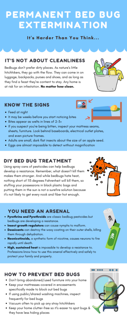 infographic explaining difficulty of permanent bed bug extermination including DIY bed bug treatment and how to prevent bed bugs
