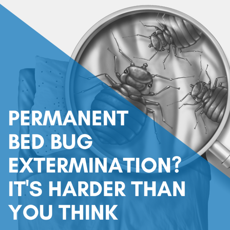 Permanent Bed Bug Extermination Is Harder Than You Think