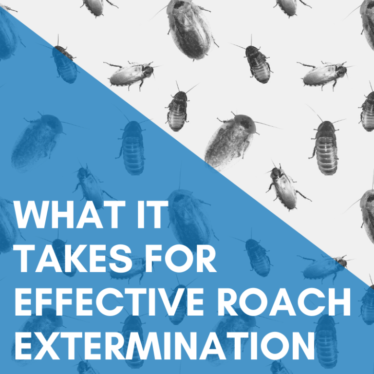 What It Takes For Effective Roach Extermination