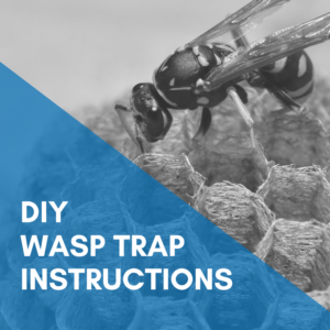 Make Your Own DIY Wasp Trap