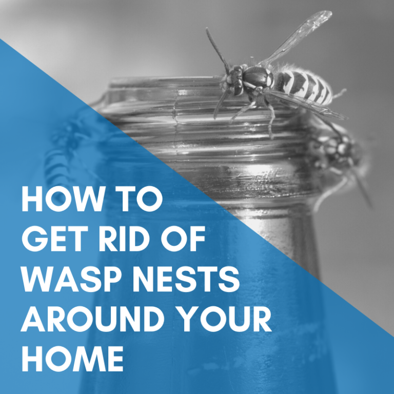 How To Get Rid Of Wasp Nests Around Your Home