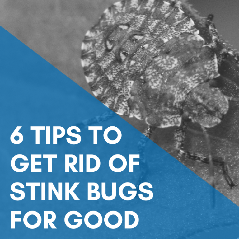 6 Tips To Get Rid of Stink Bugs For Good