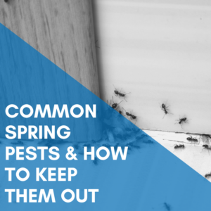 Common Spring Pests & How To Keep Them Out